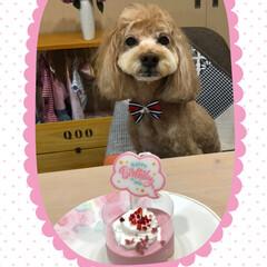 孫/お誕生日/愛犬 6/19 空ちゃん🎂10歳になりました❣…