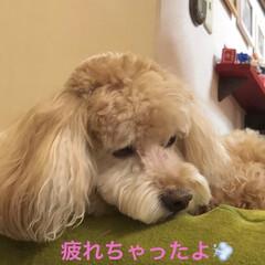 夏らしくスッキリ/愛犬/サマーカット/トリミング 空ちゃんトリミングに行って来ましたぁ❣️…(4枚目)