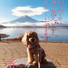 のんびり/お正月/孫/愛犬/河口湖/富士山 🎍あけましておめでとうございます㊗️  …