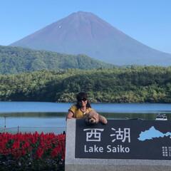 ハンモックカフェ/西湖/富士山/おでかけ/旅行/フォロー大歓迎/... 続 満喫した 山中湖の旅です🐶 お天気☀…