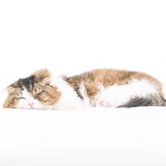 ネコ/猫/ねこ/ペット/愛猫/昼寝/... 「充電中」 ダラけてるんじゃないよ、 こ…