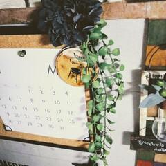 カフェ風インテリア/男前インテリア/賃貸インテリア/フェイクグリーンアレンジ/フェイクグリーン/らくがき屋gami/... いなざうるす屋さんのフェイクとgamil…