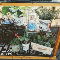 癒しの空間/グリーンのある暮らし/多肉植物のある暮らし/多肉植物/ベランダガーデン/ベランダ/... またまたベランダガーデンからです☺️ 多…