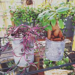 ジャンク雑貨/男前インテリア/ガーデンインテリア/多肉植物/観葉植物/ガーデン雑貨/... リメ缶を作りました😆  ターナーミルクペ…