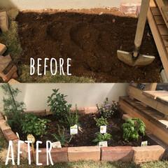 庭づくり/おうち時間/簡単/暮らし 芝を剥いで、レンガを並べて、ハーブを植え…