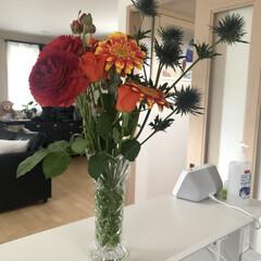 まったり休日/スコティッシュ兄弟/お花/暮らし 今日はお休みだったので、久しぶりにお花を…