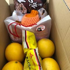 メロン/熊本味噌/デコポン/熊本 熊本の実家から届きました。  体調を崩し…