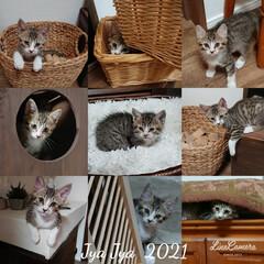 猫とインテリア/猫と暮らす/リビング/キッチン/ハンドメイド/DIY/... おはようございます🙇 暑~い☀️しか出な…(1枚目)