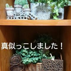 ハンドメイド/サビ/3段ボックス/リメイク/多肉ちゃん/ペイント/... 🙇