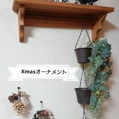 木の実/オーナメント/クリスマス2019/リミアの冬暮らし/DIY/雑貨/... おはようございます🙇 松ぼっくりでツリー…