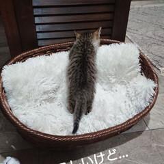 子猫 おはようございます🙇 今日の🐈にゃんこ🐈…(2枚目)