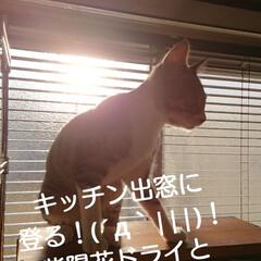 猫とインテリア/猫との生活/DIY/簡単DIY/LIMIADIY同好会/おうち時間DIY/... パンパス♪ 今年も✂️して来ました(^w…(5枚目)