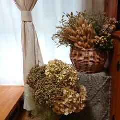 雑貨/スモークツリー/アナベルドライ/紫陽花/ドライフラワーのある暮らし/ドライフラワー おはようございます🙇 アナベル&スモーク…