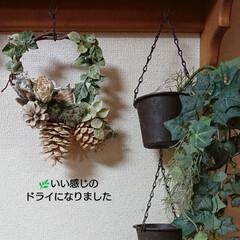 木の実リース/グリーンドライ/リミアの冬暮らし/DIY/雑貨/ハンドメイド/... おはようございます🙇 今日も寒いですね~…(1枚目)