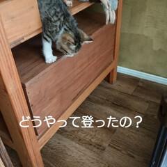 子猫/ハンドメイド/ドライフラワー おはようございます🙇 \(^o^)/今日…(3枚目)