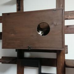 猫とインテリア/木工/1×4材diy/猫との生活/ハンドメイド/手作り/... 今朝のジャジャはかくれんぼしてます(*^…(1枚目)