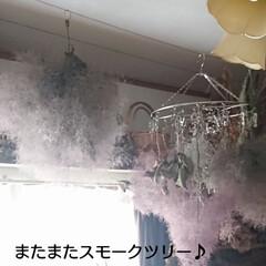 子猫/ハンドメイド/ドライフラワー おはようございます🙇 \(^o^)/今日…(2枚目)