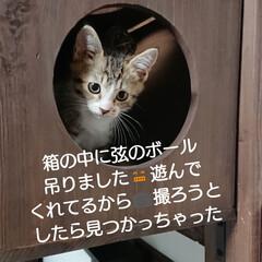 キャットウォークDIY/猫と暮らす/洋室/ハンドメイド/雑貨/DIY/... おはようございます🙇 今年の紫陽花&アナ…(6枚目)