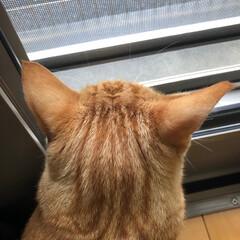 多頭飼い/後頭部/猫 猫の後頭部って癒される(2枚目)