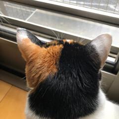 多頭飼い/後頭部/猫 猫の後頭部って癒される