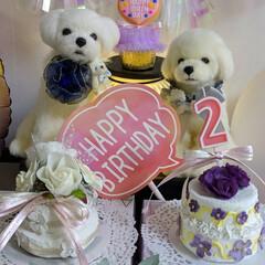 LIMIAペット同好会/ペット/ハンドメイド/ペット仲間募集/犬/わんこ同好会/... 昨日は、くらんのお誕生日🎂に お祝いメッ…