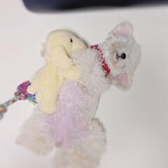 LIMIAペット同好会/ペット/ペット仲間募集/犬/わんこ同好会/ぷてぃくら/... お人形の🐶ちゃんと遊んでいたのに 気付い…