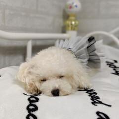 令和の一枚/LIMIAペット同好会/わんこ同好会/おやすみショット/寝顔/寝相/... かわいい寝顔😪💤も あるでしよ~😊☺️😍🥰
