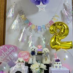 LIMIAペット同好会/ペット/ハンドメイド/ペット仲間募集/犬/わんこ同好会/... 昨日は、くらんのお誕生日🎂に お祝いメッ…(2枚目)