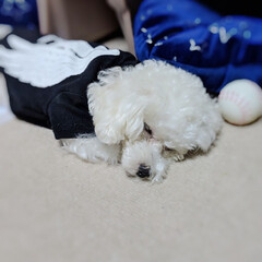 LIMIAペット同好会/ペット/ペット仲間募集/犬/わんこ同好会/おやすみショット/... ♥ ٩̋(๑˃́ꇴ˂̀๑)きゃわ んっ❓…