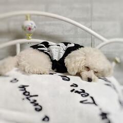 LIMIAペット同好会/ペット/ペット仲間募集/犬/わんこ同好会/おやすみショット/... 最近のお気に入り寝床😁