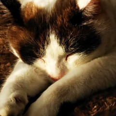おやすみショット/にゃんこ同好会 どんな疲れも吹き飛ばす 癒しの寝顔💓💓💓…