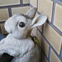 大好き雨蛙 傘立てに飾ってあるウサギさんの頭に雨蛙さ…(2枚目)