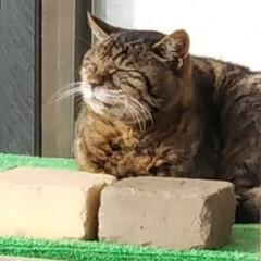 長生きしてね/日光浴/野良猫ちゃん 近くのお家で飼われていたにゃんこ いつの…
