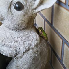 大好き雨蛙 傘立てに飾ってあるウサギさんの頭に雨蛙さ…(3枚目)