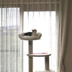 キャットタワー/子猫/LIMIAペット同好会/にゃんこ同好会/うちの子自慢 まだまだ小さいミミたんですが、 キャット…