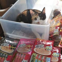 ちゅーる大好き/猫好きさんと繋がりたい/三毛猫のおんなのこ 久しぶりの投稿 ちゅーるの在庫整理をして…