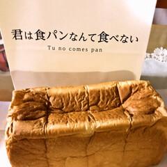 お土産/君はパンなんて食べない/食パン いただきもの! 雨の日お友達が かって持…