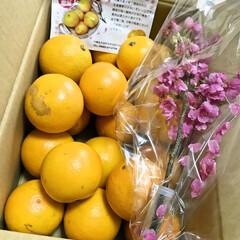 バレンタインスイート/沖縄/オレンジ バレンタインスイートという オレンジをい…(1枚目)