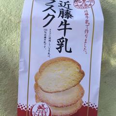 近藤牛乳ラスク/近藤牛乳サブレ/近藤牛乳 セブンイレブンで初めて発見! 神奈川県限…