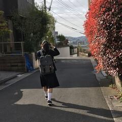 「娘中学生になりました! 5日入学式の後昨…」(1枚目)