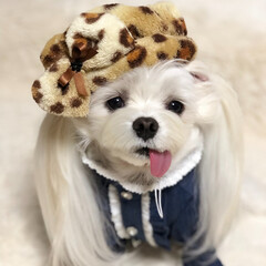 愛犬/帽子/犬/わんこ/マルチーズ/犬服/... 愛犬くぅちゃん流行りのオシャレしました🤗…