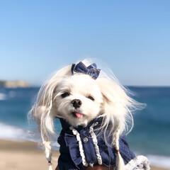 愛犬/海/お散歩/オシャレ/デニム/わんこ/... 冬の海も一緒に見れて良かった🌊