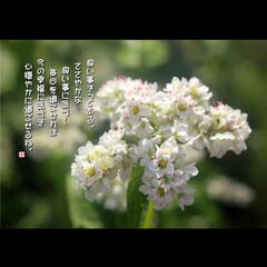 風景 側の花言葉は恋人同士