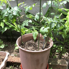 庭/夏野菜 夏野菜を育てる季節がやって来た😊 今年は…(1枚目)