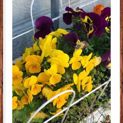 綺麗/癒し/お花達 我が家の大切なお花達💐🌼🌸🍀 ✨綺麗に咲…