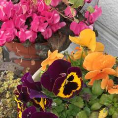 綺麗/癒し/お花 大切なお花達💐🌼🍀 今日も綺麗に咲き誇っ…