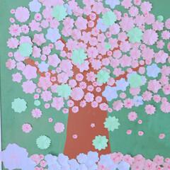 子供達/お花/壁面制作/桜 最初の投稿編集しました💦💦 ごめんなさい…(2枚目)