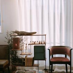 オシャレ/照明器具/ルームライト/ニトリ/インテリア そろそろ引越しなので 記念に部屋を撮っと…(1枚目)