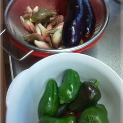 夏野菜/秋野菜/家庭菜園 そろそろ、茗荷も終わりかと思い 昨日、茗…