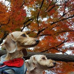 紅葉狩り/紅葉/かわいい/お散歩好き/お出かけ好き/お出かけ部/...  紅葉🍁見てきたよ😊